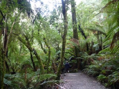 Otway Ranges Australia