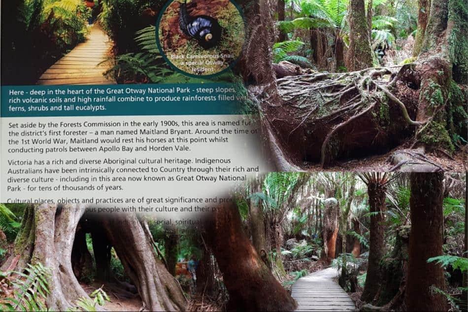 Maits Rest Rainforest Walk Cape Otway Great Ocean Road Tour