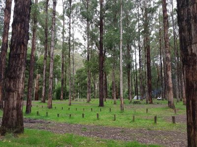 Dandos Free Campground Otways