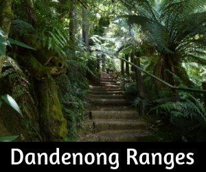 Dandenong Ranges Victoria Australia