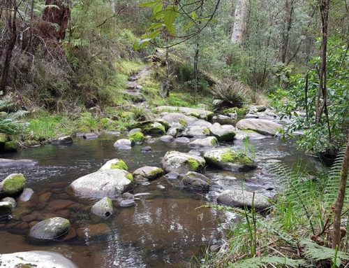 Erskine Falls Walking Track from Lorne