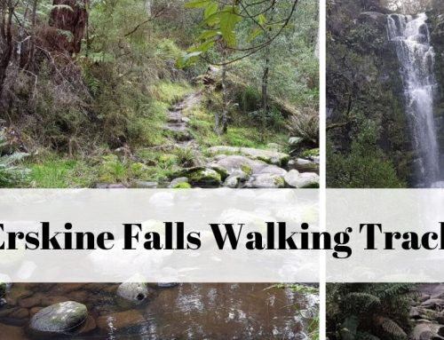 Erskine Falls Walking Track from Lorne