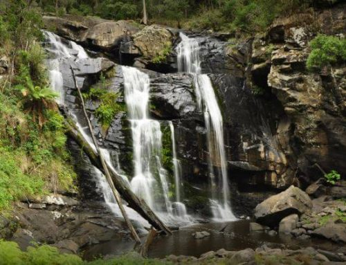 Waterfalls of the Otway Ranges National Park