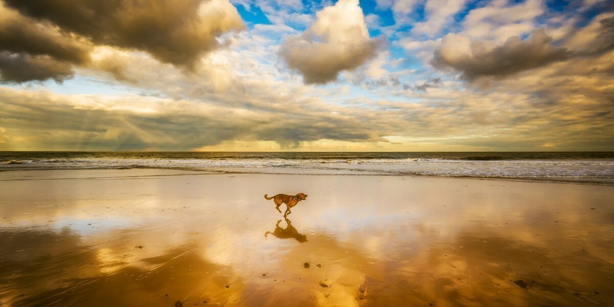 Dog Friendly Beaches along the Great Ocean Road • Great