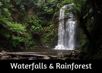 Great Ocean Road - Discover beautiful Waterfalls of the Otways, bushwalking trails and rainforest.