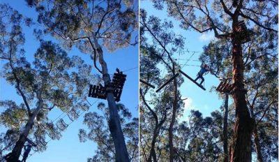 Otway Park Trees Advenutre and Zip Lining, Forest, Otway Ranges, Victoria