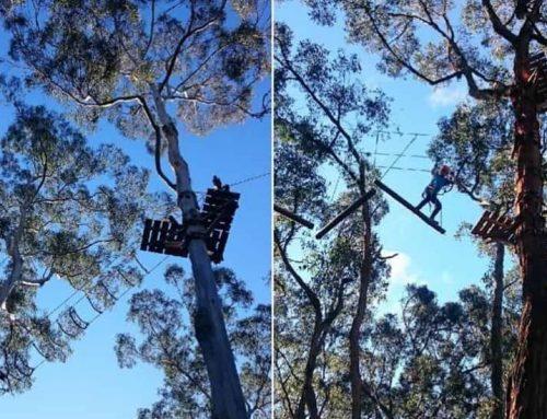 Otway Park Trees Adventure Course